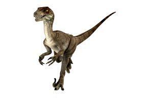 Exposicao O Mundo Dos Dinossauros Com Replicas Em Tamanhos Reais